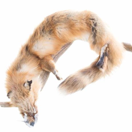 Red Fox Pelt