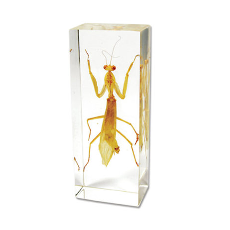 Mantis In Acrylic Paperweight