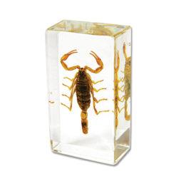 Scorpion Paperweight