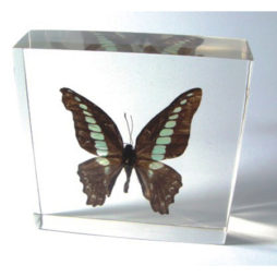 Blue Bottle Butterfly Paperweight