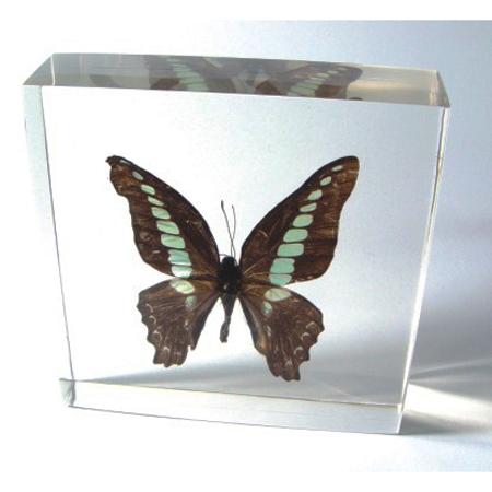 Blue Bottle Butterfly Paperweight