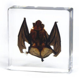 Vampire Bat In Resin-Small
