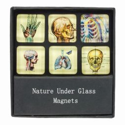 Skeletal Glass Magnets Gift Set