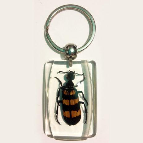 Blister Beetle Keychain