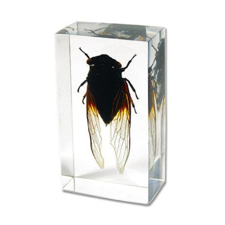 Blackish Cicada Paperweight