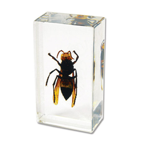 Wasp Paperweight